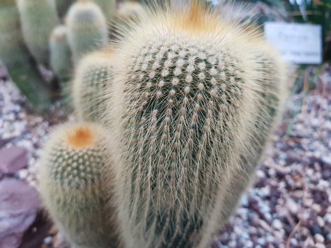 This is just one of many cacti at the gardens