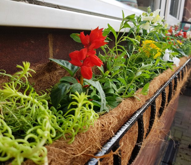 Flower bed under the window
