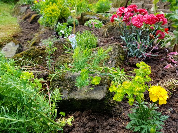 Plants in the rockery